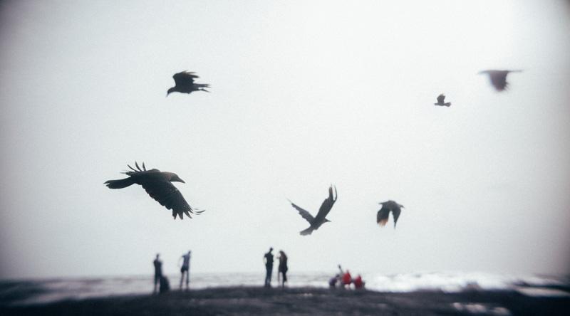 mumbai birds_chris lange